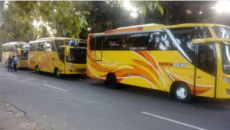Ini Dia Sewa Bus Medium Mojokerto