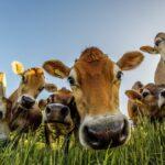 Pengertian Biogas Beserta Manfaat dan Cara Pembuatannya!