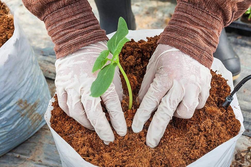 Cara Membuat Pupuk Organik dari Sabut Kelapa